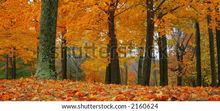 Add fiery warmth to any project with an autumn scene. - stock photo