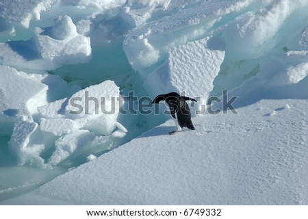 Adelie penguin wants to jump - stock photo
