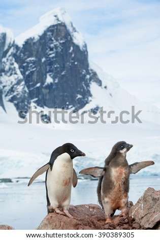 Adelie penguin with chick standing on the rock, high rocky mountain covered by snow in background, Antarctic Peninsula - stock photo