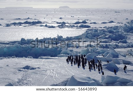 Adelie penguins in Antarctic scenery - stock photo