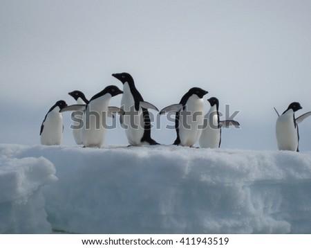 Adelie penguins on an iceberg - stock photo
