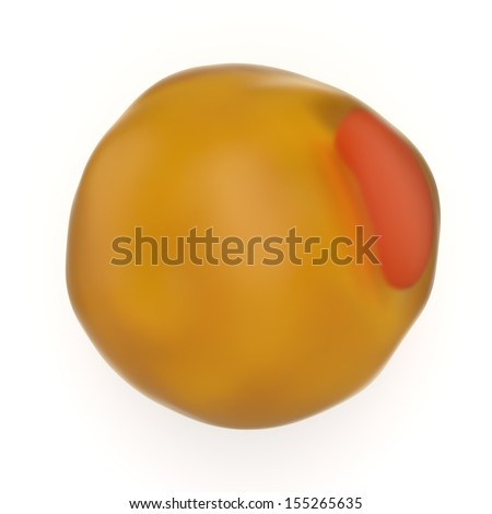 Adipocyte or lipidocyte fat cell used by the body to store energy in the form of triglyceride fat and responsible for obesity, weight gain and weight loss - stock photo