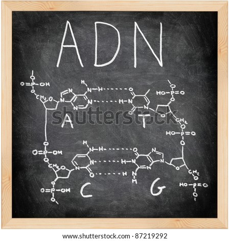 ADN, DNA in Spanish, French and Portuguese written on blackboard with chalk. Chemical structure of DNA including all four bases. Chalkboard science and education concept. - stock photo