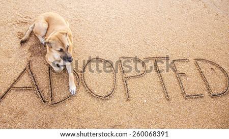 Adopt Shelter Dog - stock photo