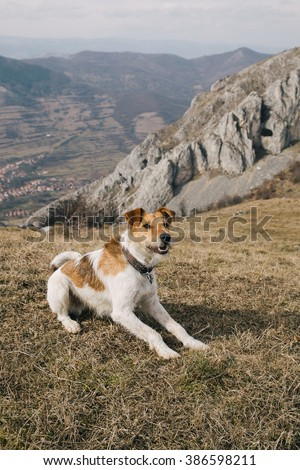 adopted dog enjoying its first trip to the mountains - stock photo