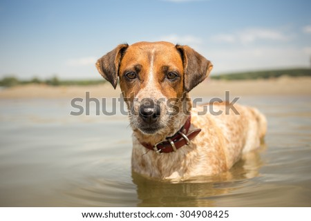 Adopted mixed breed dog on summer vacation - stock photo