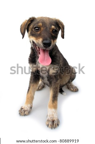 Adopted pariah dog puppy - stock photo