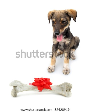 Adopted pariah dog puppy with huge bone - stock photo