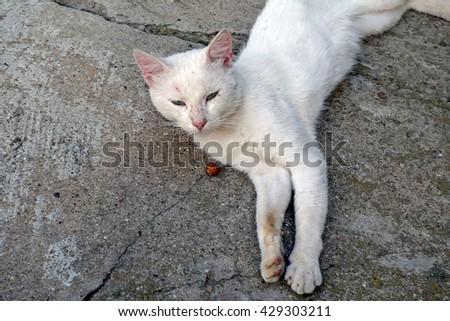 Adorable albino cat sleeping in the backyard                       - stock photo