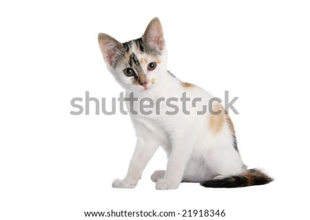 Adorable and cute kitten on isolated on white background - stock photo