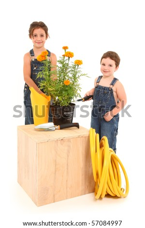 Adorable 3 and 6 year old brother and sister with potted marigold plant over white background. - stock photo