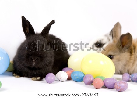 Adorable baby bunny rabbits with easter props