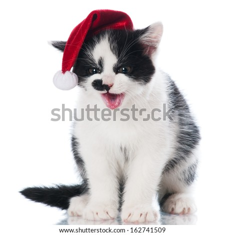 adorable black and white kitten in a santa hat - stock photo