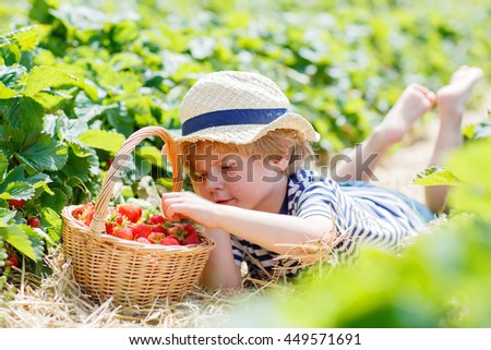 Adorable blond little kid boy picking and eating strawberries on organic bio berry farm in summer, on warm sunny day. Harvest fields in Europe. - stock photo