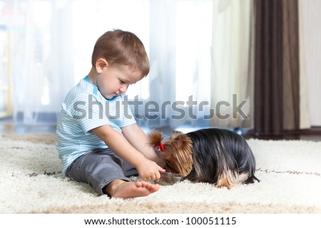 adorable boy feeding yorkshire terrier dog  at home
