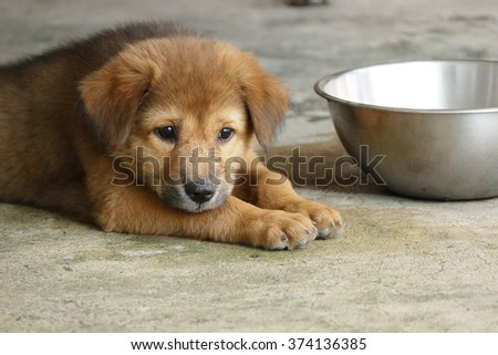 Adorable Brown Puppy Dog Lying on the Ground Next to Water Bowl - stock photo