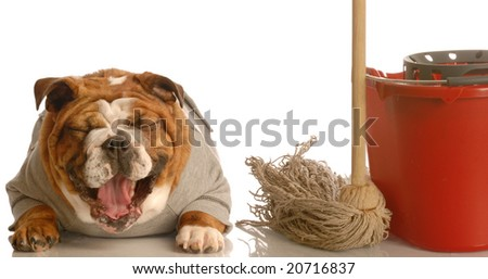 adorable bulldog sitting beside mop and bucket laughing - concept of dog not being house trained - stock photo