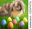 Adorable bunny and Easter eggs on the grass - stock photo
