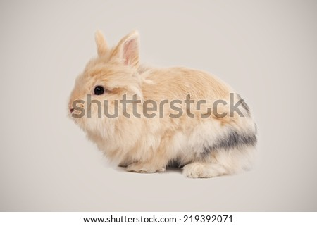Adorable bunny on beige background - stock photo