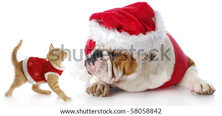 adorable cat and dog dressed up for christmas with reflection on white background - stock photo