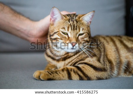 Adorable cat enjoying being petted.