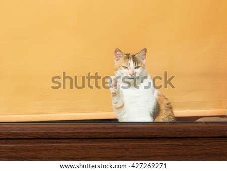 adorable cat greeting with paw the newcommers - stock photo