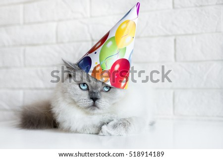 adorable cat in a birthday hat