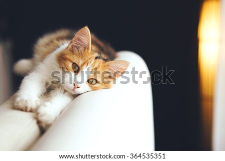 Adorable cat relaxing on the sofa at home - stock photo
