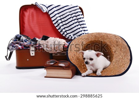 Adorable chihuahua dog and suitcase with clothing isolated on white - stock photo