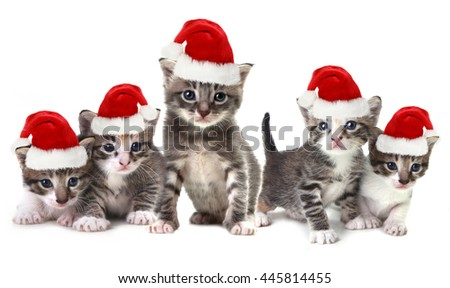 Adorable Christmas Kittens Wearing Red Hat on White - stock photo