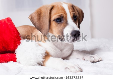 Adorable  Christmas Puppy on a bed