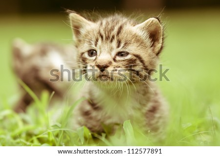 adorable curious kitty - stock photo