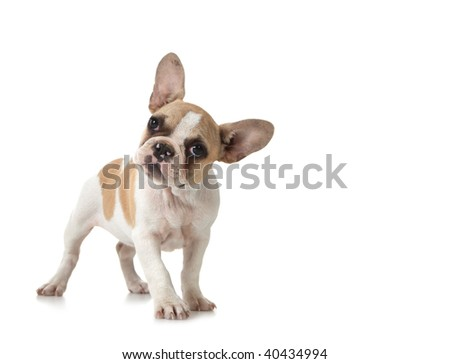 Adorable Curious Puppy Dog With Copy Space on White - stock photo
