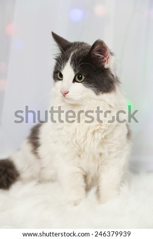 Adorable cute cat sitting on carpet, close up - stock photo