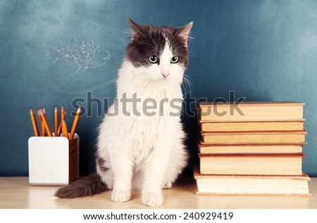 Adorable cute cat sitting on table near green chalkboard - stock photo