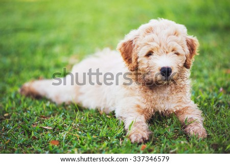 Adorable Cute Puppy Outside in the Yard - stock photo