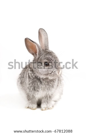 Adorable cute rabbit sit on white background - stock photo