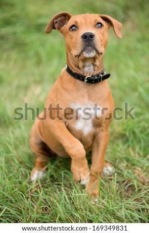 Adorable Dog - stock photo