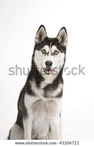Adorable dog a over white back ground - stock photo