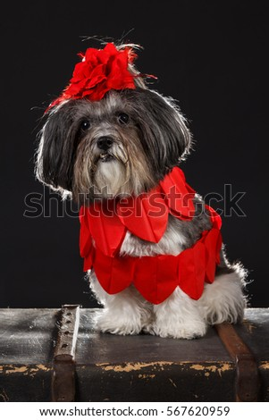 Fantastic Valentine Bow Adorable Dog - stock-photo-adorable-dog-dressed-with-red-hearts-and-big-red-rose-flower-ribbon-bow-sitting-on-an-old-suitcase-567620959  Snapshot_311310  .jpg