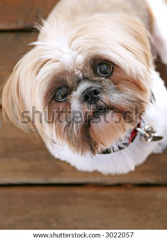 Adorable dog looking up - stock photo