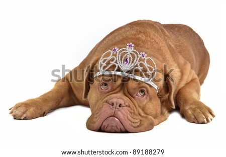 Adorable dog with silver diadem