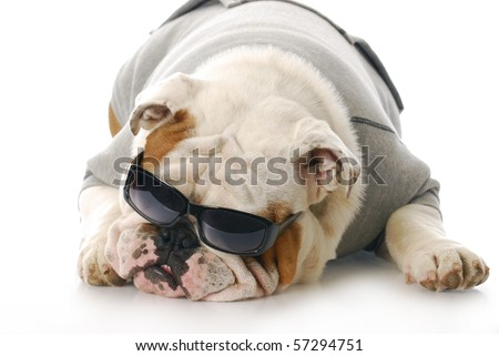 adorable english bulldog wearing dark sunglasses with reflection on white background - stock photo