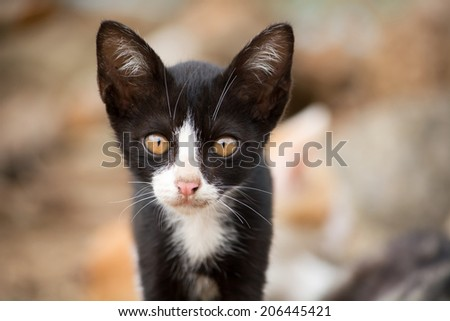 Adorable face of black and white kitten. - stock photo