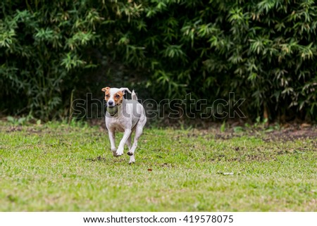 Adorable Funny Dog With His Favorite Ball - stock photo