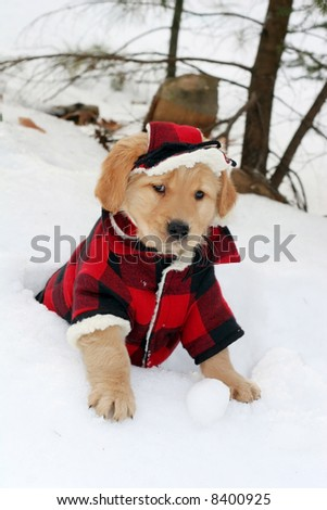 adorable golden retriever puppy in plaid hat and coat sitting in hole in snow - stock photo