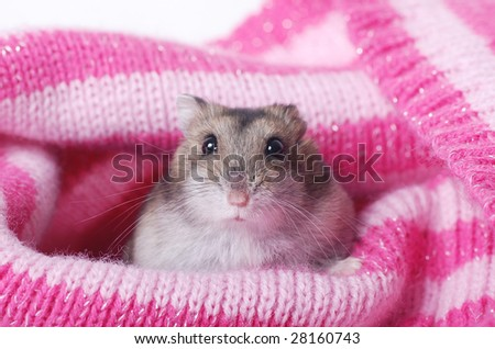 adorable hamster