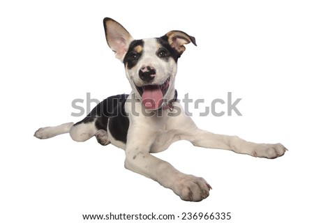 Adorable happy mutt puppy lying down with mouth open and one ear up isolated on white - stock photo