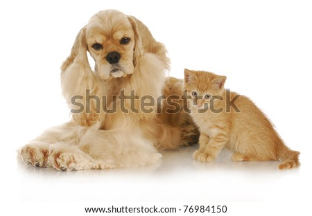 adorable kitten and dog interacting with reflection on white background