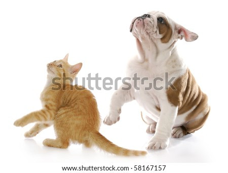 adorable kitten and puppy looking up with scared expressions with reflection on white background - stock photo